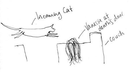 incoming-cat.jpg